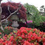 シバブル花季節