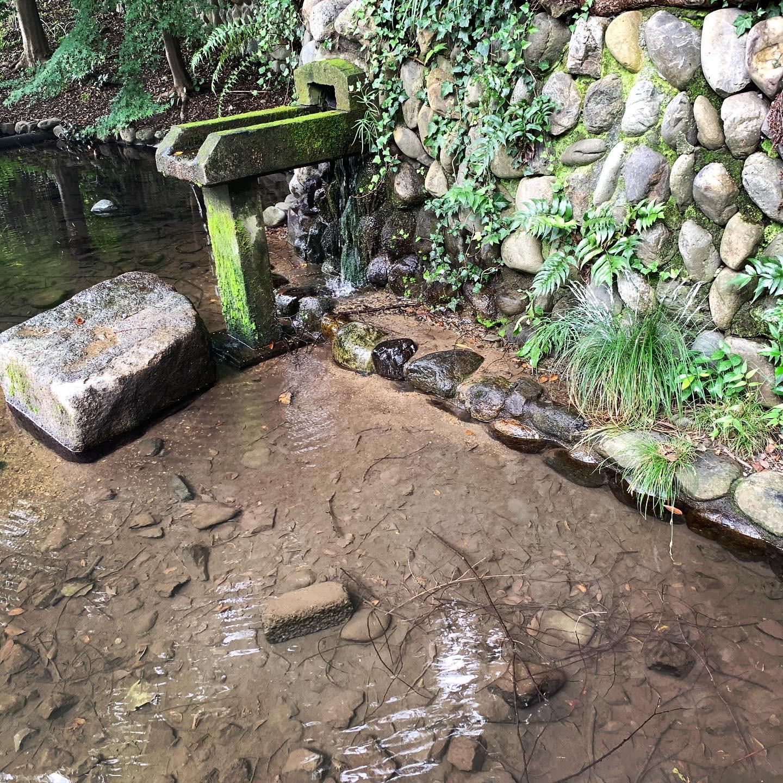 ブルーベリー狩り東京関東シバブル