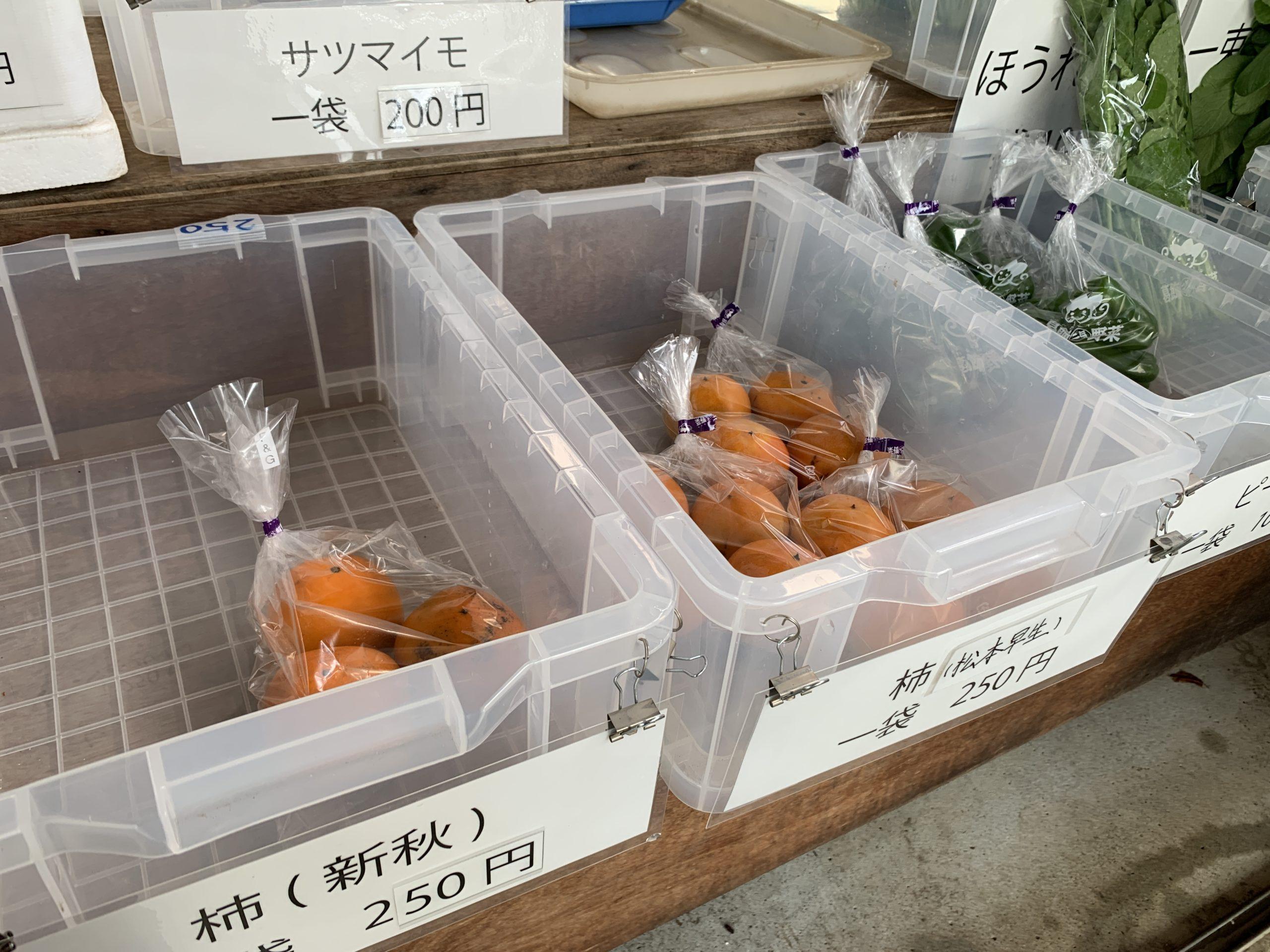 ブルーベリー狩り関東東京シバブル